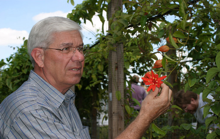Ron Boender admiring one of his Passiflora @ Butterfly World